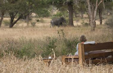 Kuro Tarangire sits on a game route so there are often elephants around camp.